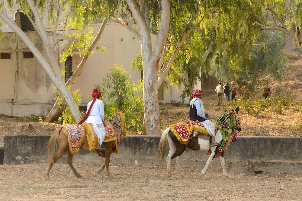 Horsesr ,City of Bundi, Rajasthan,India,Asia