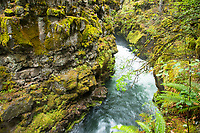 Rogue Gorge. Oregon.