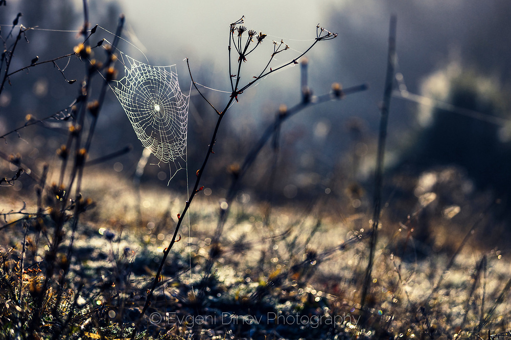 Spider web between the twigs