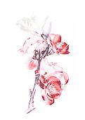 Bloemen als pentekening