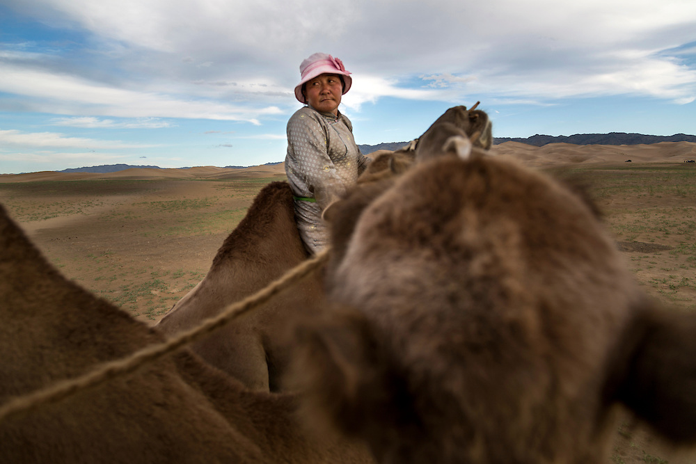 A Mongolian woman wearing a pink hat leads a camel caravan in the Gobi Desert on July 28, 2012. © 2012 Tom Turner Photography