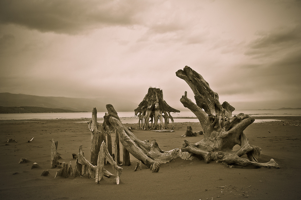 Landscapes of beach at Flathead Lake with Giger-like tree roots