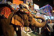 29th August 2014, Sarojini Nagar, New Delhi, India. Female elephant Gulabo passes a rupee note placed in her trunk by a devotee to her handler during Gaja (elephant) pooja at the Sree Vinayaka Mandir in New Delhi, India on the 29th August 2014. <br /> <br /> Ganesh Chaturthi is the Hindu festival celebrated in honour of the god Ganesha, the elephant-headed, remover of obstacles and the god of beginnings and wisdom.<br /> <br /> Elephant handlers (Mahouts) eke out a living in makeshift camps on the banks of the Yamuna River in New Delhi. They survive on a small retainer paid by the elephant owners and by giving rides to passers by. The owners keep all the money from hiring the animals out for religious festivals, events and weddings, they also are involved in the illegal trade of captive elephants.The living conditions and treatment of elephants kept in cities in North India is extremely harsh, the handlers use the banned 'ankush' or bullhook to control the animals through daily beatings, the animals have no proper shelters are forced to walk on burning hot tarmac and stand for hours with their feet chained together. <br /> <br /> PHOTOGRAPH BY AND COPYRIGHT OF SIMON DE TREY-WHITE<br /> + 91 98103 99809<br /> email: simon@simondetreywhite.com photographer in delhi