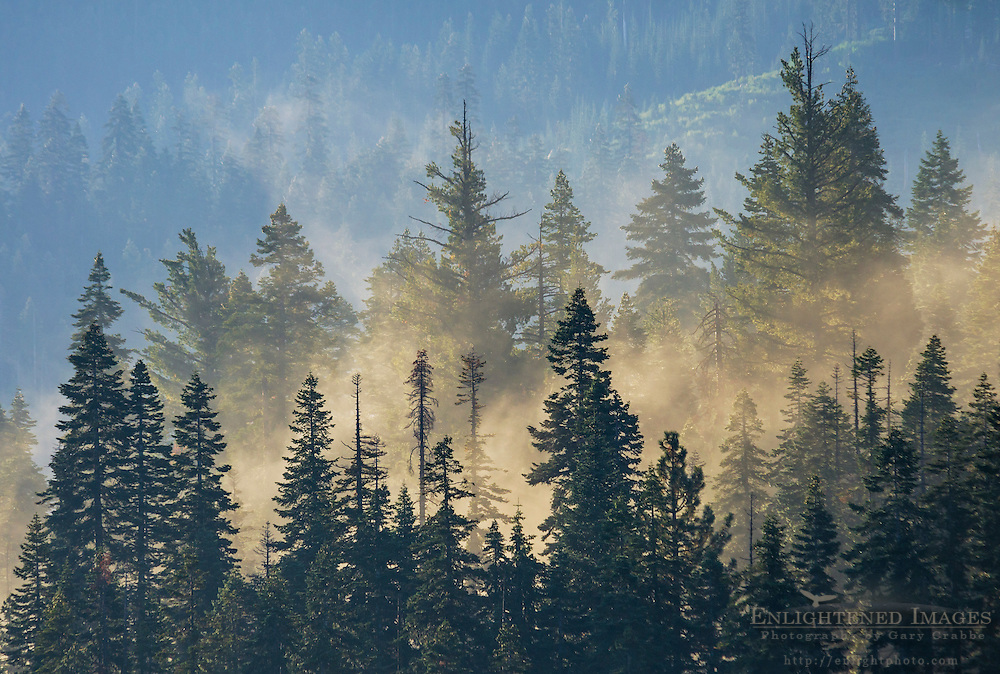 Mornng mist rising out of trees, Tahoe National Forest, Sierra County, California