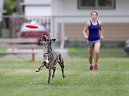 Winnipeg Frisbee Dogs