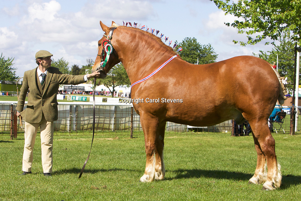 George Pratt's KILMANNAN SHORT<br />