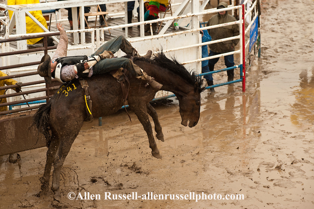 Bareback Rider Spencer Brown At Miles City Bucking Horse