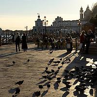 Italy, Veneto, Venice. November/12/2007...Piazza San Marco pigeons at sunset in Venice, Italy. ..