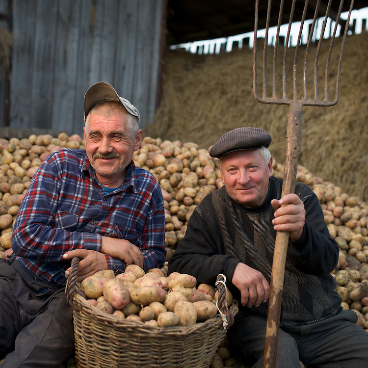 Farmers near Lviv, Ukraine grow potatoes  and cabbage, two of the staple crops of small farmers in this rich farming country near the Black Sea.