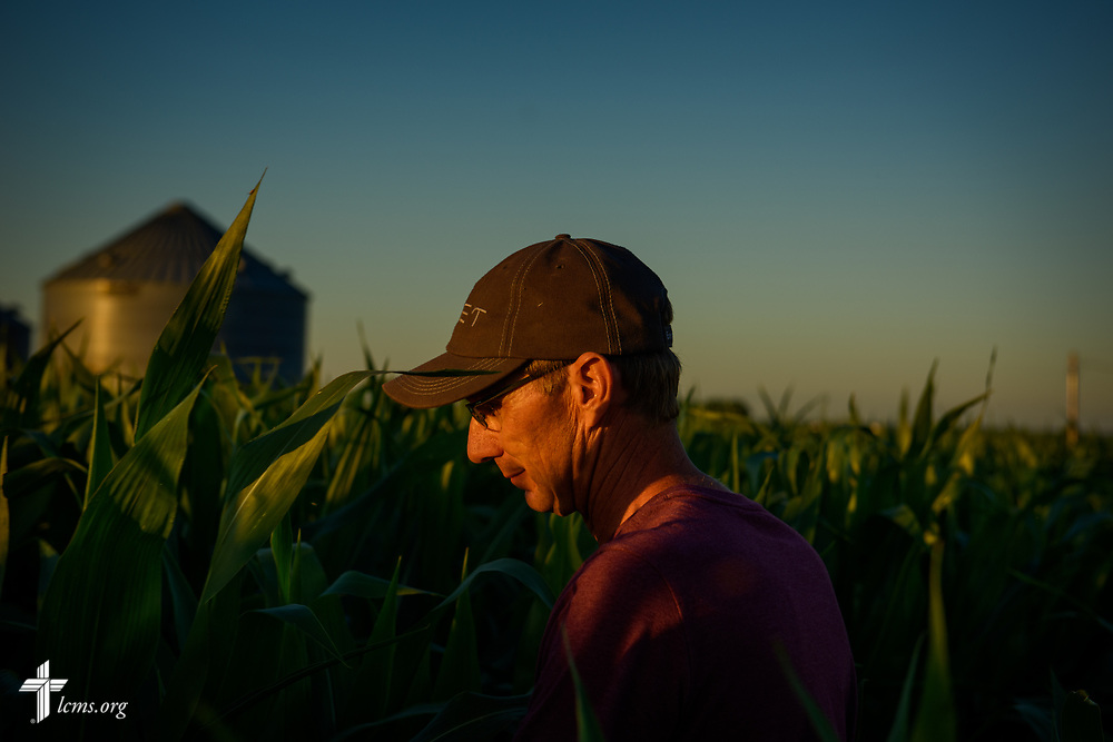 The Rev. Steven Struecker, full-time farmer and pastor of Immanuel Lutheran Church, Livermore, Iowa, and Zion Evangelical Lutheran Church, Lu Verne, Iowa, checks his crops for insects on Saturday, July 8, 2017, in West Bend, Iowa. LCMS Communications/Erik M. Lunsford