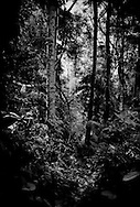The Malaysian rainforest., a 130 million year old primary rainforest that supports tigers, sumatran rhinoceros, Asian elephants, Malaysian gaur (wild bovine), tapir, gibbons, monkeys totalling over 200 species of terrestrial animals, over 300 species of birds and over 1,000 species of butterfly.  Malaysia's dwindling rainforests are home to over 14,500 species of flowering plants and trees.