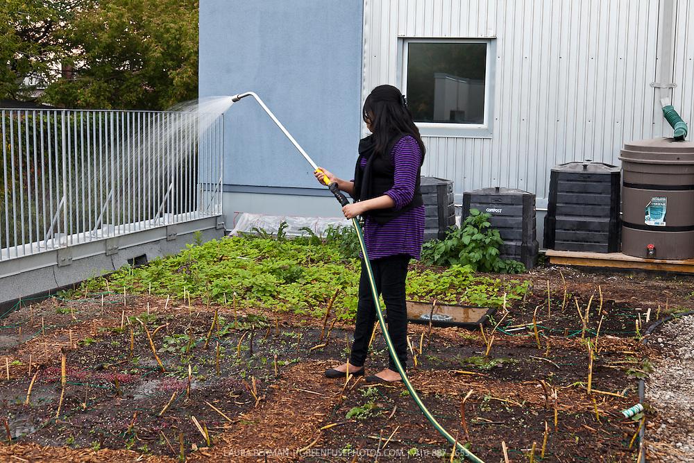 Watering a rooftop garden