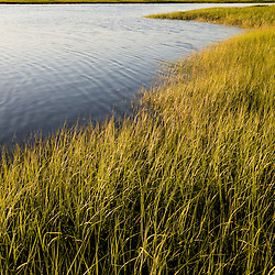 Early evening on the salt marsh in Plum Island Sound Massachusetts USA