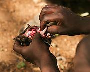 Africa, Tanzania, Lake Eyasi, portrait of a young Hadza male eating. A small tribe of hunter gatherers AKA Hadzabe Tribe