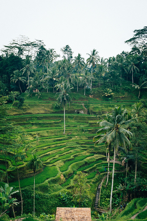 The Tegalalang rice terraces of Ubud in Bali, Indonesia.
