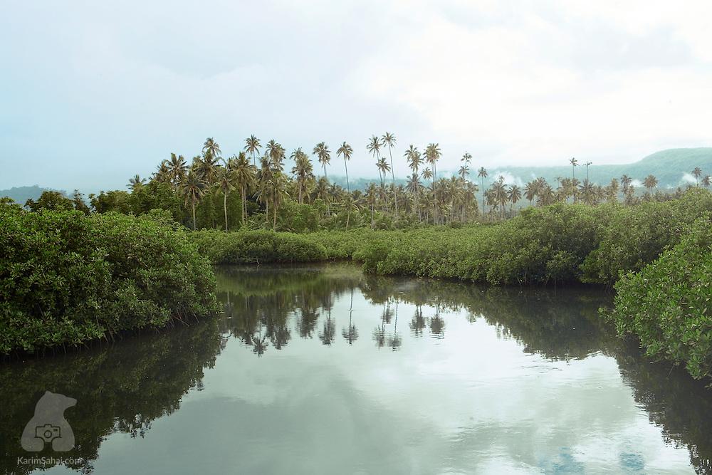 Moata'a mangrove near Apia, Samoa.