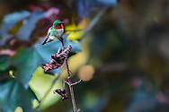 https://Duncan.co/ruby-throated-hummingbird