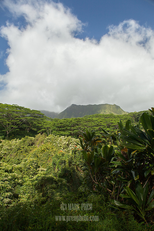 Clouds touch the summit of a nearby mountain in this view from the Kuilau Ridge Trail on Kauai.