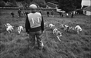 """THE HOUNDS ARE """"SLIPPED"""" IN A TRAIL RACE AT BENTPATH AGRICULTURAL SHOW, BENTPATH, NEAR LOCKERBIE. SATURDAY 2.9.00.©JEREMY SUTTON-HIBBERT 2000.."""