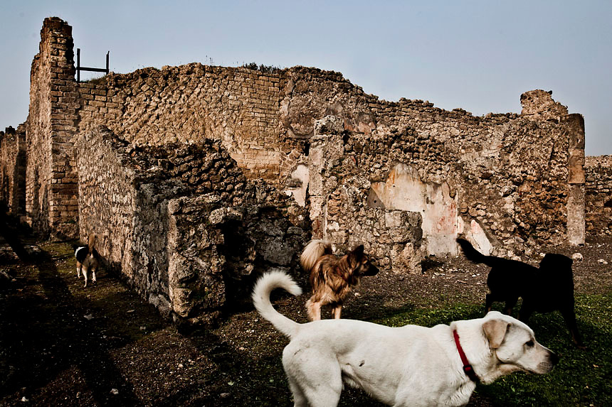 Dogs strolls in Pompeii.Nearly 4 month after the collapse of the House of the Gladiators and then of a wall at the House of the Moralist, Pompeii still faces neglet and mismanagement.Now the Italian government has begun to investigate the matter. Nine people are to be questioned, although Marcello Fiori, the emergency commissioner who was appointed to save the site in 2008, is conspicuously absent from the group.Those who will be grilled by the public prosecutor include the former superintendent of Naples and Pompeii, the site director who oversaw the waterproofing of the House of the Gladiators, the head of technical services at Pompeii, and an architect. The investigation will also examine Fiori's administration, which ended in July, including its use of government funds, which many critics have seen as wasteful and ineffective.
