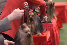 MAR 10 2000 CRUFTS AT THE N.E.C