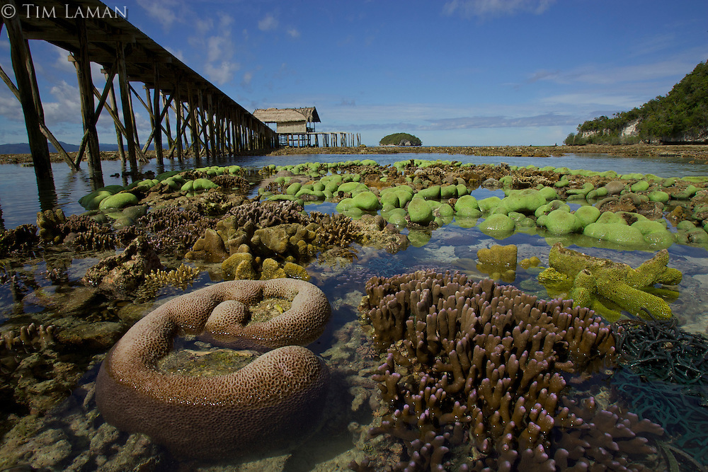 Exposed coral by a dock.