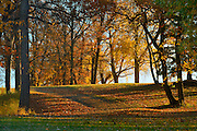 Autumn leaves in forest<br /> La Barriere Provincial Park<br /> Manitoba<br /> Canada