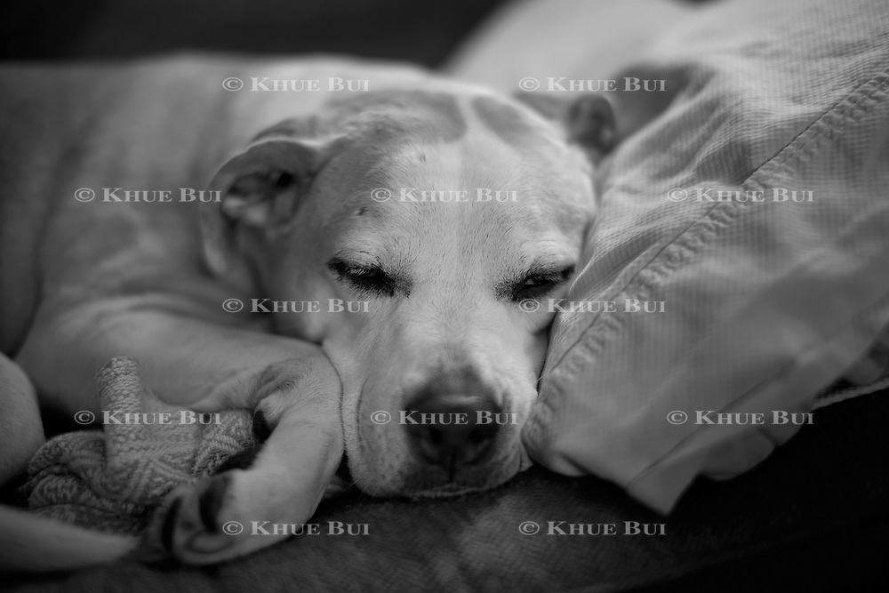 Izzie naps at home Monday, January 29, 2018, in Richmond, VA.<br /> <br /> Photo by Khue Bui
