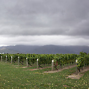 Rows of vines at Cloudy Bay Vineyard during a cloudy day, Jackson Road, Marlborough, New Zealand..The winery and vineyards are situated in the Wairau Valley in Marlborough at the northern end of New Zealand's South Island. This unique and cool wine region enjoys a maritime climate with the longest hours of sunshine of any place in New Zealand. Wairau Valley, Marlborough, New Zealand. 9th February 2011. Photo Tim Clayton