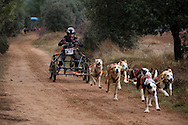 04/12/2016. Sledders and their dogs compete along trails on the countryside during the Spanish National Mushing Contest on December 4, 2016 in Olvega, in Soria province, Spain. Around 300 competitors and a thousand dogs attended to the competition. (© Pablo Blazquez)