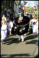 Kid-size replica of Padstow's official adult hobby horse dances at head of children's parade on May Day morn; Cornwall, England
