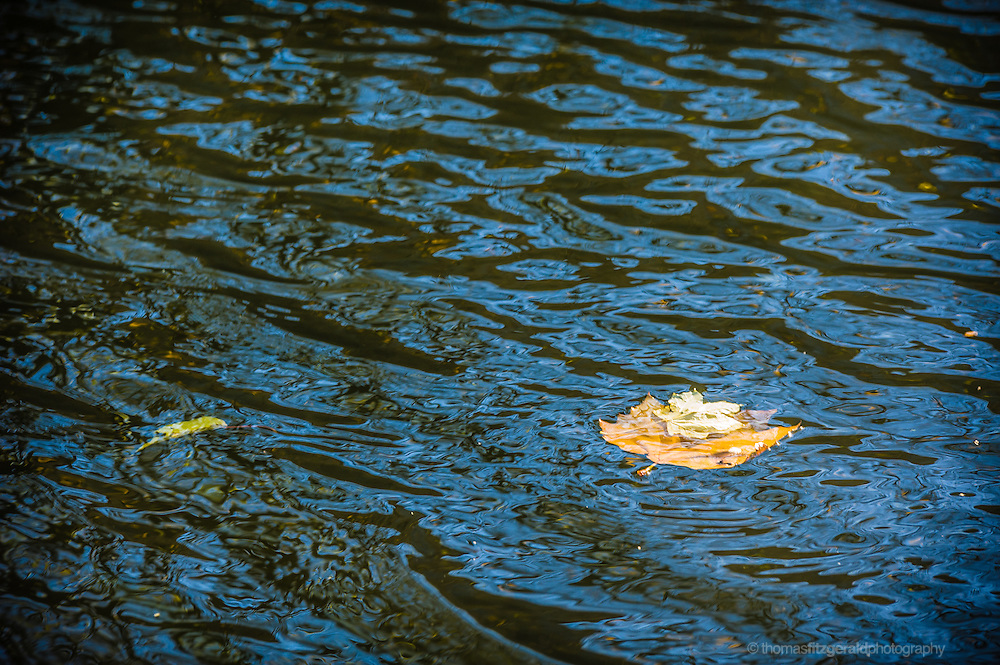 A pair of leaves floats in the choppy waters of this lake from a dublin park