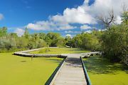 Boardwalk on pond at Fort Whyte Alive<br /> Winnipeg<br /> Manitoba<br /> Canada