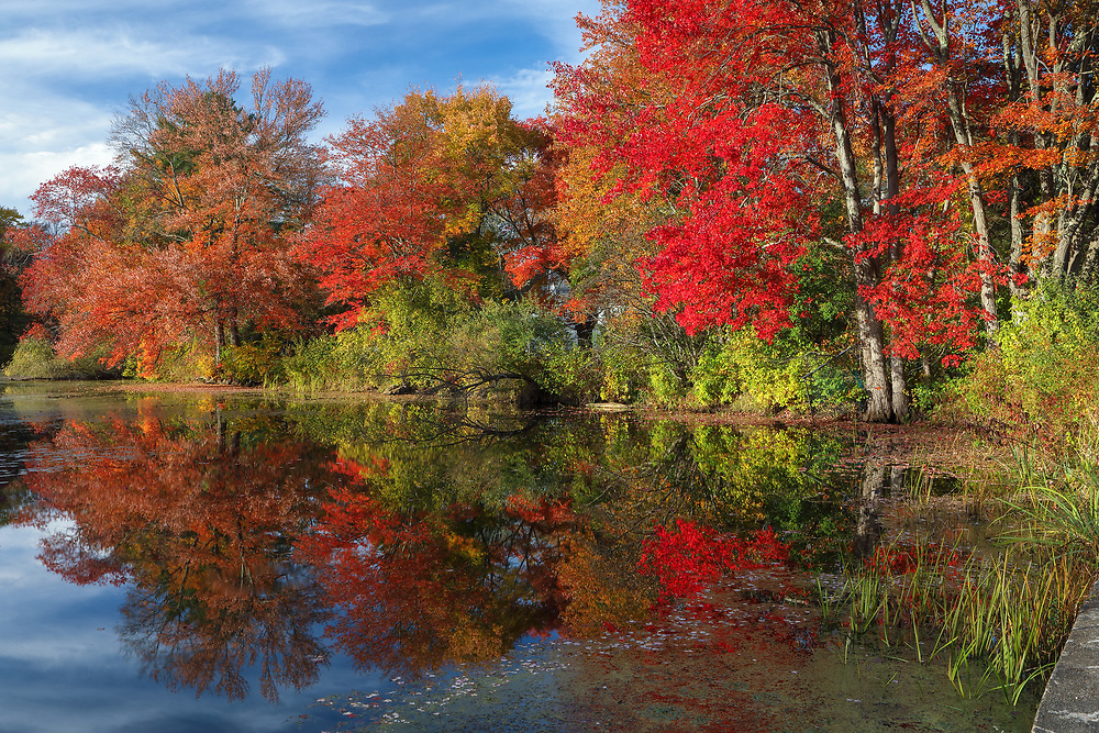Brilliant New England fall foliage peak colors at Factory Pond in Holliston, Massachusetts. This Massachusetts autumn photography image was inspired by the red glorious fall colors and pond reflection. The photograph was taken at the site where the Darling Woolen Mill stood. The mill was lost to a ire in 1933. <br /> <br /> Massachusetts fall foliage Factory Pond photo images are available as museum quality photo, canvas, acrylic, wood or metal prints. Wall art prints may be framed and matted to the individual liking and interior design decoration needs:<br /> <br /> https://juergen-roth.pixels.com/featured/central-massachusetts-fall-foliage-brillance-juergen-roth.html<br /> <br /> Good light and happy photo making!<br /> <br /> My best,<br /> <br /> Juergen<br /> Licensing: http://www.rothgalleries.com<br /> Photo Prints: http://fineartamerica.com/profiles/juergen-roth.html<br /> Photo Blog: http://whereintheworldisjuergen.blogspot.com<br /> Instagram: https://www.instagram.com/rothgalleries<br /> Twitter: https://twitter.com/naturefineart<br /> Facebook: https://www.facebook.com/naturefineart