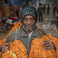 An elderly man selling flowers in a the largest flower market of Dhaka Bangladesh. <br /> Bangladesh is one of the twenty countries in the world with the largest elderly populations, and by 2025, along with four other Asian countries, will account for 44% of world's total elderly population.