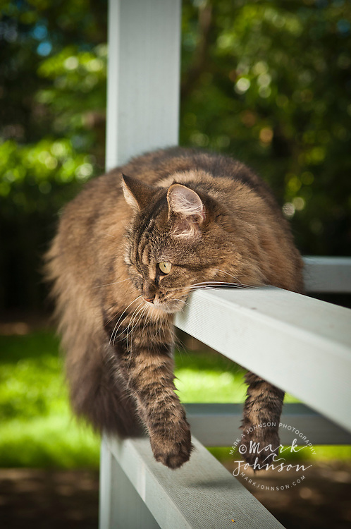 Pet cat sprawled over verandah railing