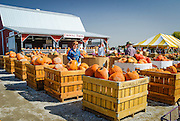 Pumpkins for sale at Councell Farms in Maryland in the fall.