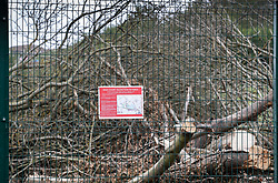 © Licensed to London News Pictures. 28/04/2019. London, UK. A High Court injunction notice is placed on a fence in front of felled trees at High Speed 2 rail project works in teh Colne Valley west of London. Extinction Rebellion have joined with Stop HS2 protestors to occupy trees in Colne Valley to stop their felling for the HS2 rail project. Workers were expected to start cutting down the trees yesterday and to continue today but the protests have stopped the work. Photo credit: Peter Macdiarmid/LNP
