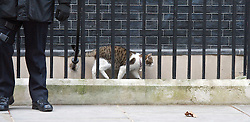 Larry the cat outside 10 Downing Street, London Great Britain, 5th February 2013. Photo by Elliott Franks / i-Images.
