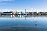 Birds on Tjornin, Reykjavik