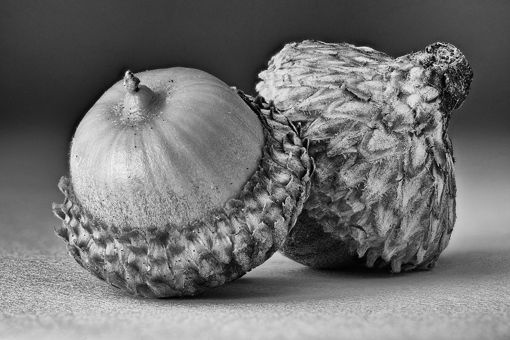 Photographing acorns has become an annual ritual for me and 2016 was no different. This image is a simple still life that shows the incredible intricacy and texture of acorns.<br />