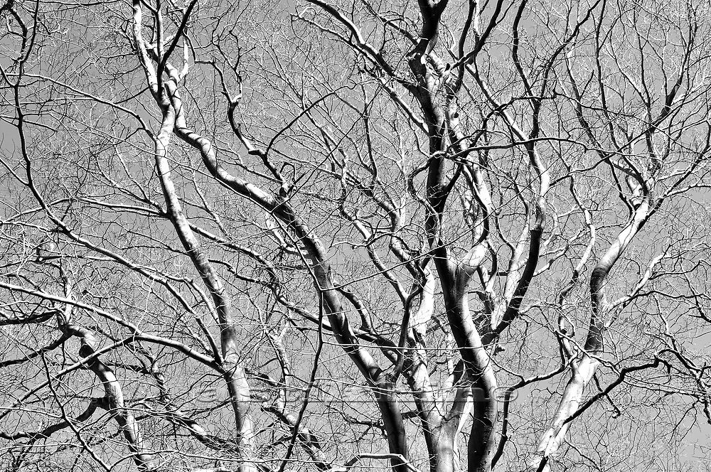 Net of branches