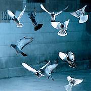 Spanje, Barcelona, 15-1-2004Duiven vliegen op. Associatie vrijheid, losmaken, ontstijgen, vogels, duif, vleugels, gevleugeld, onschuld, boekomslagFoto: Flip Franssen