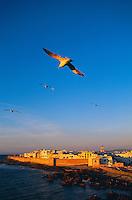 Maroc, Essaouira, Patrimoine mondial de l'UNESCO, Vue d'ensemble de la Medina // Morocco, Medina of Essaouira, Atlantic coast, Unesco world heritage