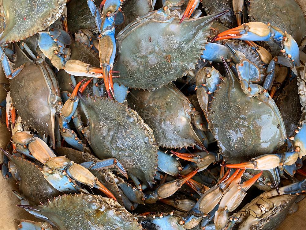 Blue crabs at a fish market