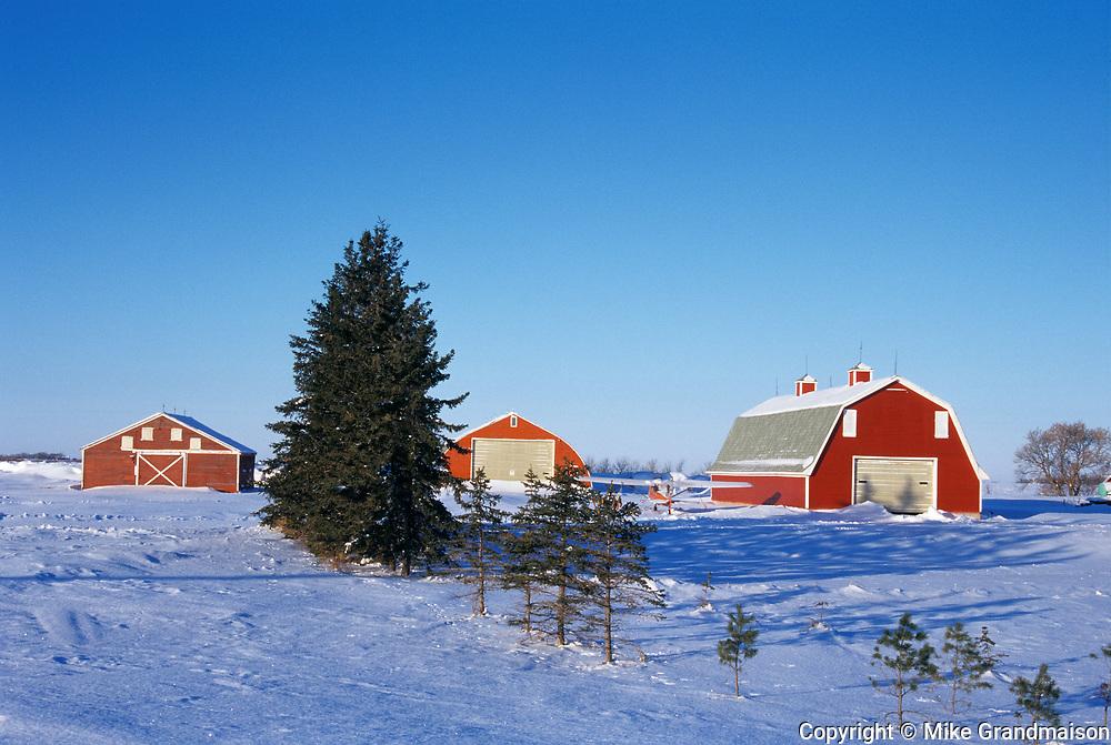 Red barns in winter<br />Brunkhild<br />Manitoba<br />Canada