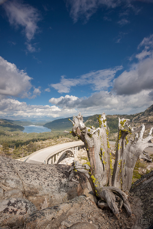 """Rainbow Bridge at Donner Lake 1"" - This dead tree was photographed above Rainbow Bridge and Donner Lake in Truckee, California."