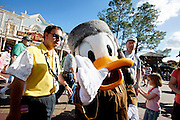 Orlando, Florida, USA, 20090324:   The Disney Animal World in Orlando. A Donald Duck character. The casting members in the park are always accompanied by a helper who is there if they faint from heat or get harassed. Photo: Orjan F. Ellingvag/ Dagbladet/ Corbis