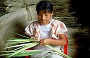 Latin America Forestry