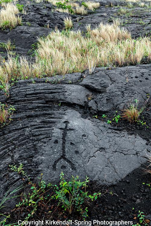 HI00258-00...HAWAI'I - Pu'u Loa Petroglyphs along the Chain Of Craters Road in Hawai'i Volcanoes National Park on the island of Hawai'i.